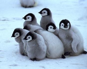 The Real Winners Of Falklands War Were Penguins